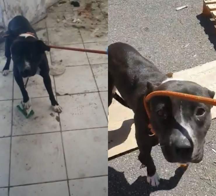 cane piange magazzino dismesso