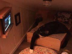 Gatto nella stanza (Foto twitter)