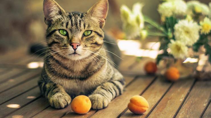 gatto e frutta