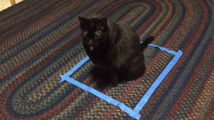 gatto nel quadrato
