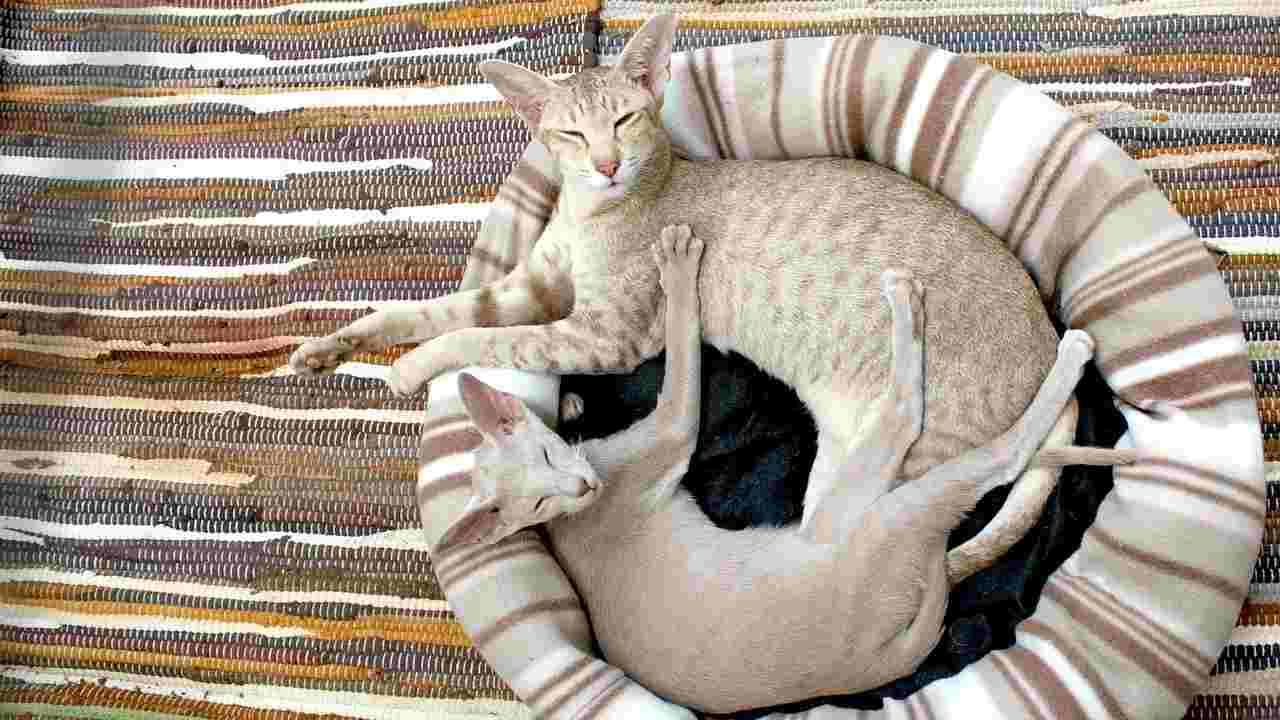 gatto non dorme cuscino