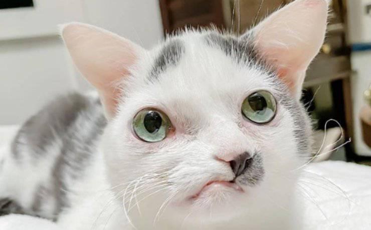 Gatto in primo piano (Foto Instagram)