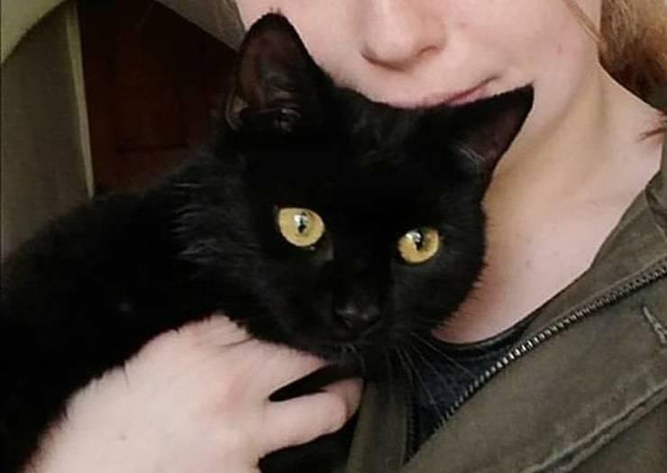 Flea il gatto scomparso per 10 giorni era intrappolato in un pozzo
