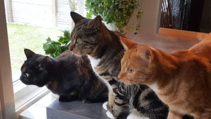 gatto può mangiare rosmarino