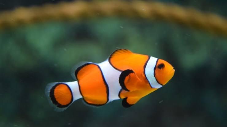 i pesci provano dolore