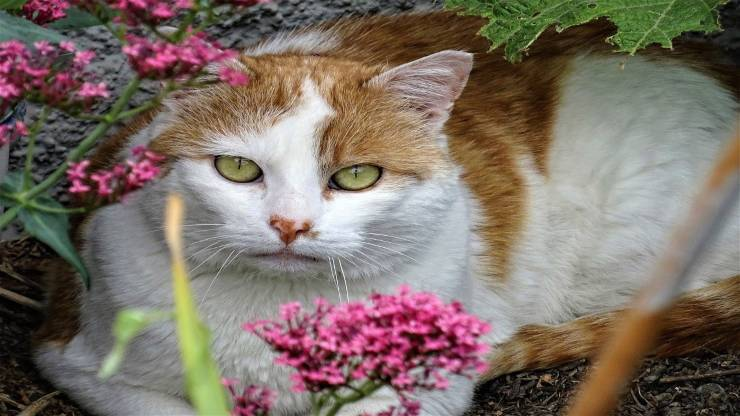 Coloboma dell'iride del gatto