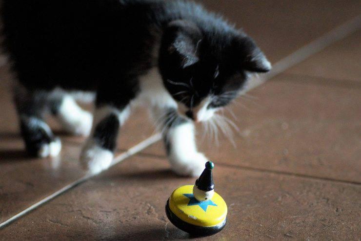 Micio gioca con giocattolo colorato