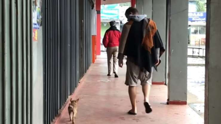 La cagnolina in cerca di adozione (Foto video)