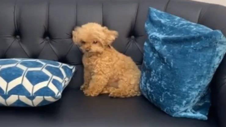 Lilly in primo piano (Foto video Instagram)
