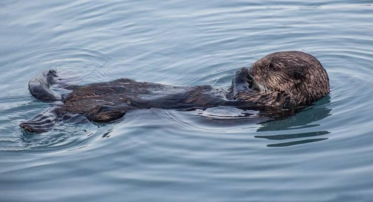 animali oceano pacifico