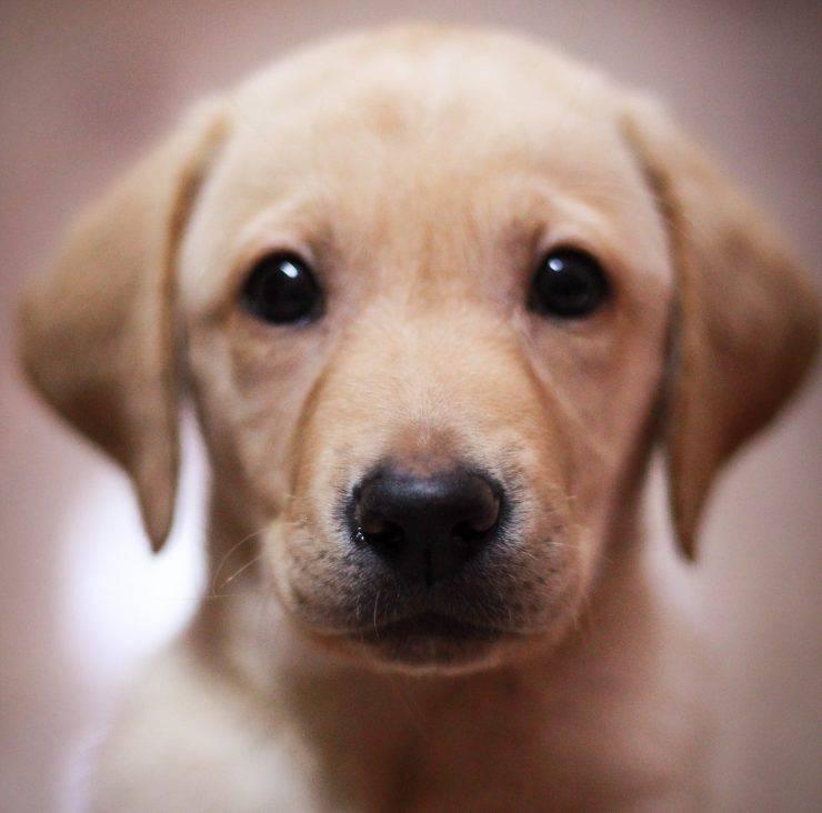 cane padrona ospedale