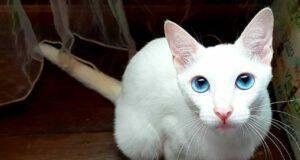 occhi diamante