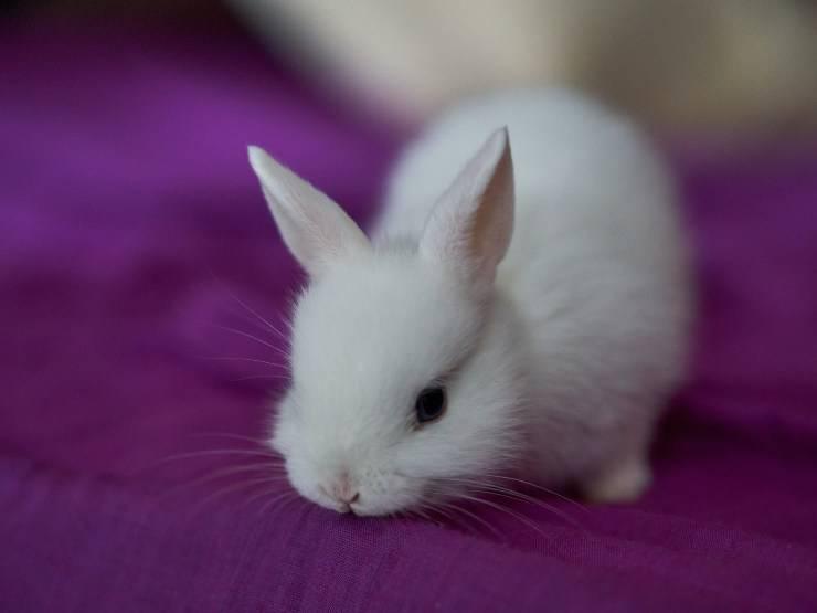 Coniglio e la sua patologia
