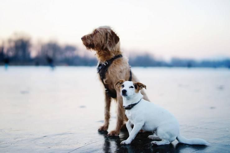 Abituare fido al cucciolo