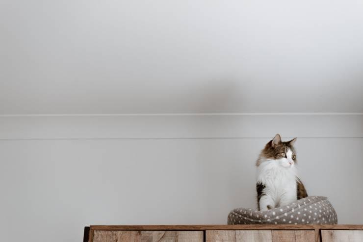 Il comportamento del felino
