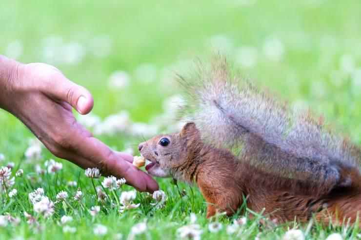 Prendersi cura di uno scoiattolo