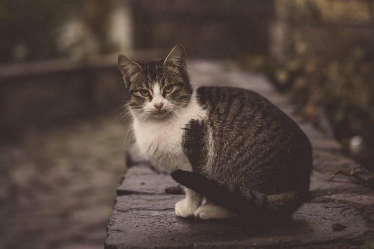 Gatti che non tollerano gli sconosciuti