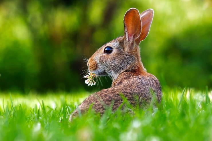 Il cibo adatto al coniglio