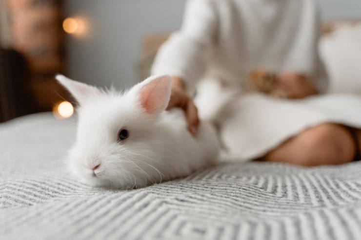 La patologia nel coniglio