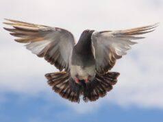 Animali che volano