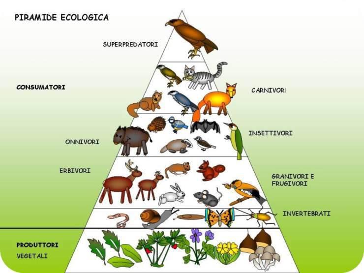 Catena alimentare terrestre