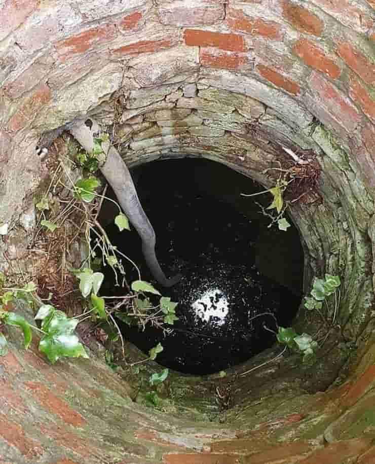 Il pozzo dove la povere gatta Flea è rimasta per 10 giorni