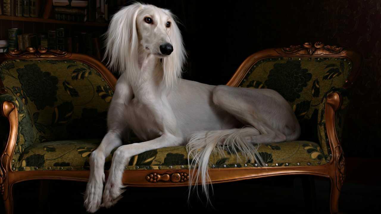 prima razza canina storia