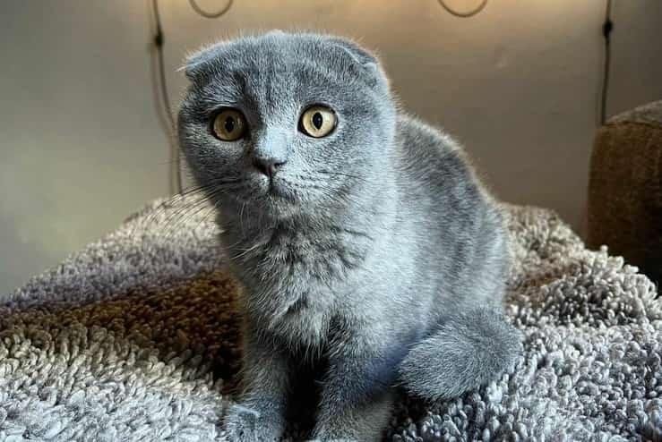 Priscilla il gatto di Tommaso Zorzi (Foto Instagram)