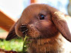 La dieta del coniglio