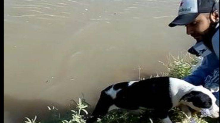 Cane nel fiume (Foto Facebook)