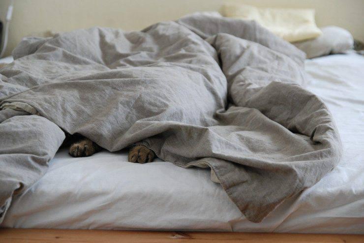 Micio nel letto