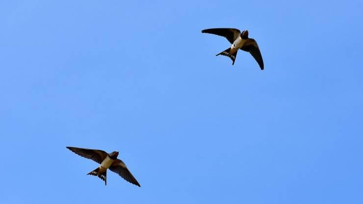 Perché gli uccelli migrano