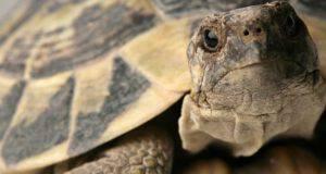 Giornata delle tartarughe 2021
