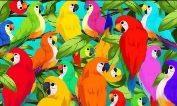 Il test visivo sconvolgente: trova il camaleonte nascosto tra i pappagalli in soli 10 secondi