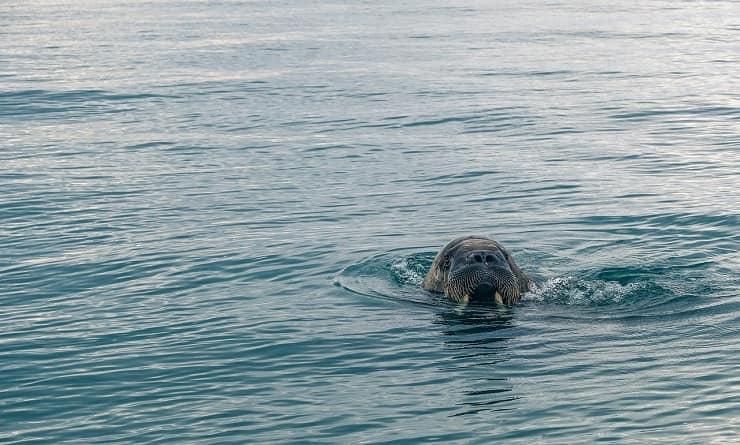 animali che vivono oceano atlantico
