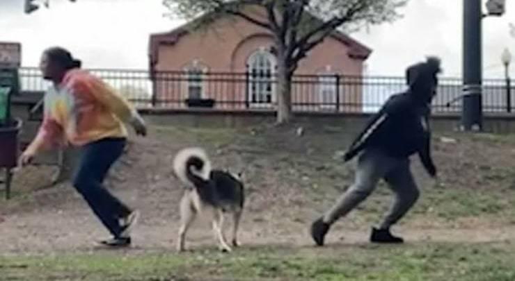 La nuova sfida virale per capire a chi vuole più bene il cane di famiglia (Screen Video)