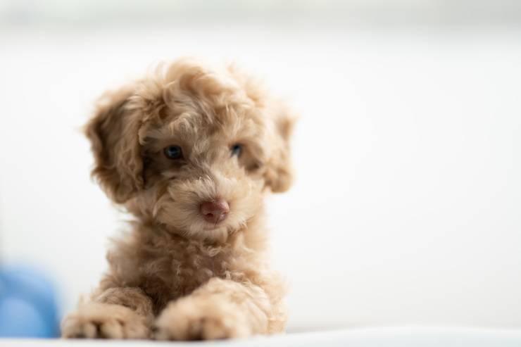 La patologia nel cane