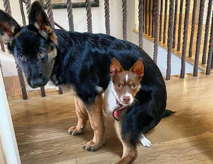 Zoe e Nello due dei 4 cani di Elisabetta Canalis ( Foto Instagram )