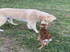 Harley e il suo amico cerbiatto (Screen Facebook)