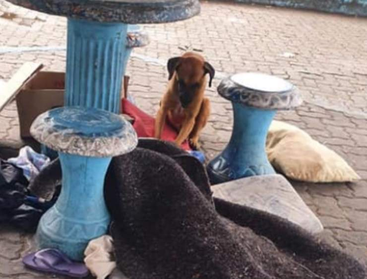 cane padrone senzatetto