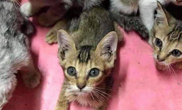 I gattini abbandonati (Foto Facebook)