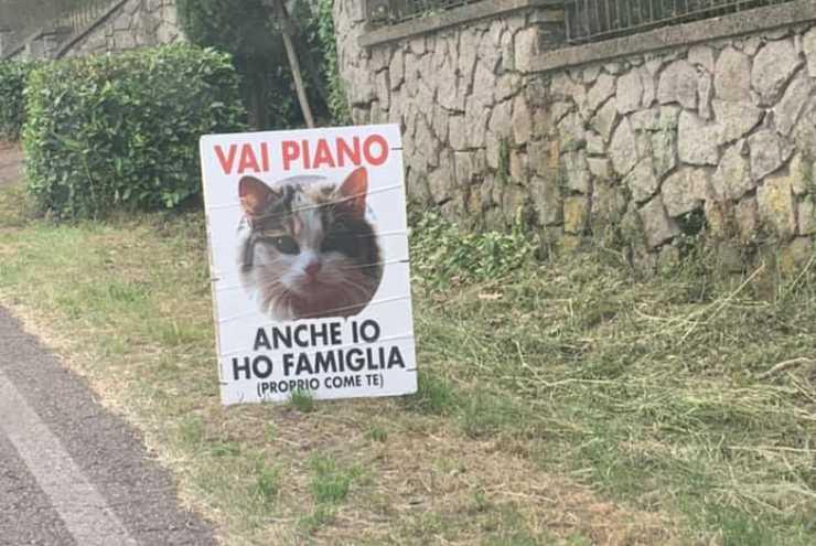 Foto cartellone gatto (Foto Facebook)