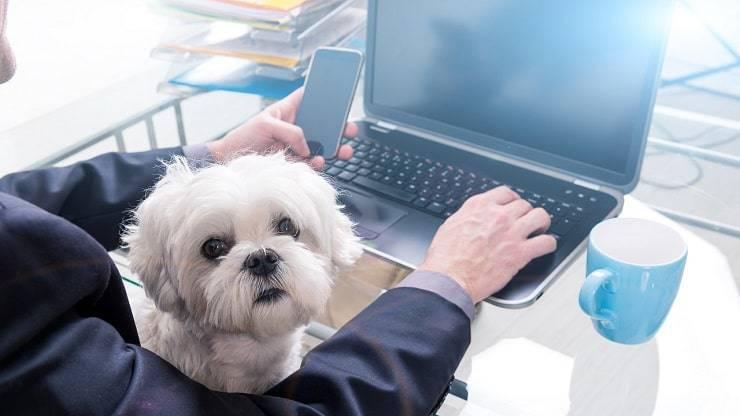giornata cani ufficio
