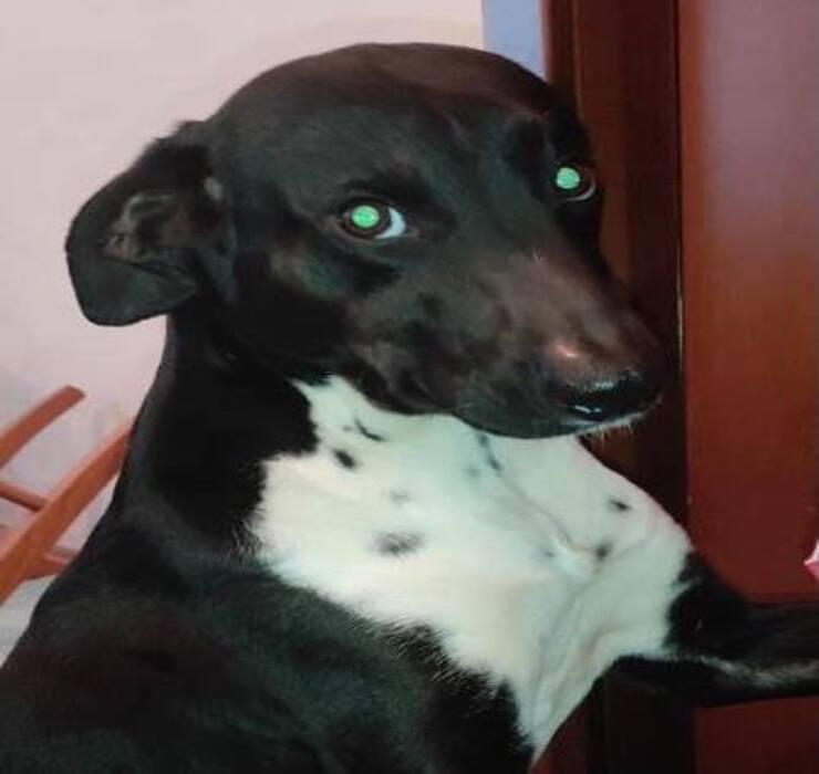 Cucciolo abbandonato ora cerca una famiglia 2 (Screen Facebook)