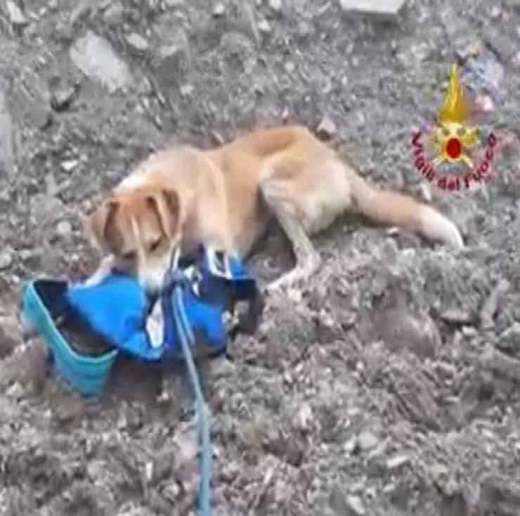 Salvataggio Keti e Wiski (Screen video Facebook)