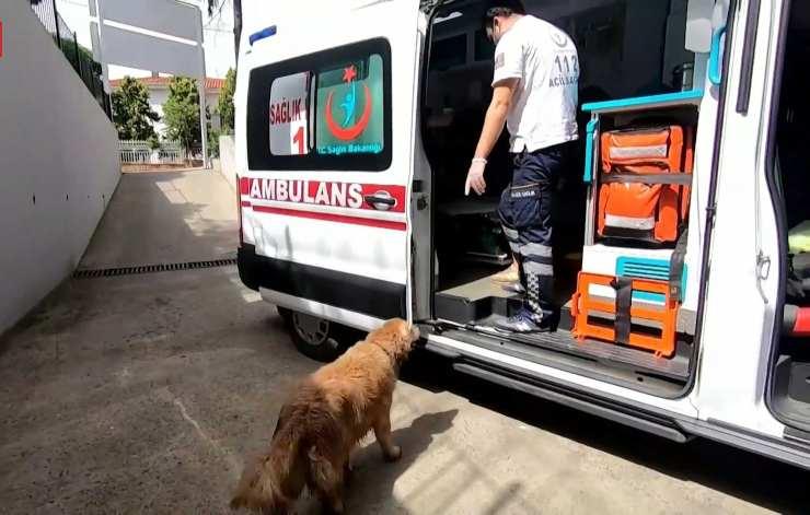 cane insegue padrona ospedale