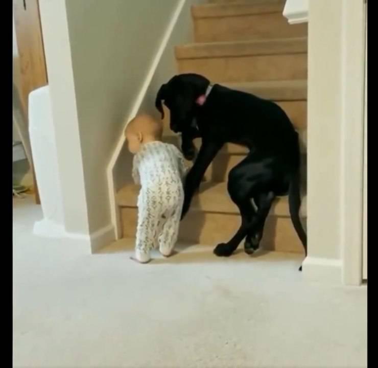 cane bambino scale video