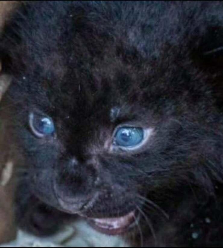 Cucciola leopardo (Screen Facebook)