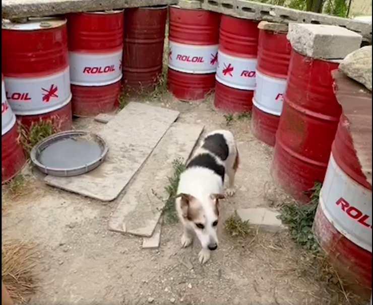 cane confinato recinto barili
