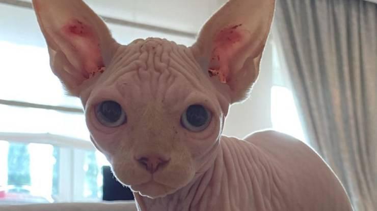 I gatti di Ilary Blasi: Alfio e Donna Paola
